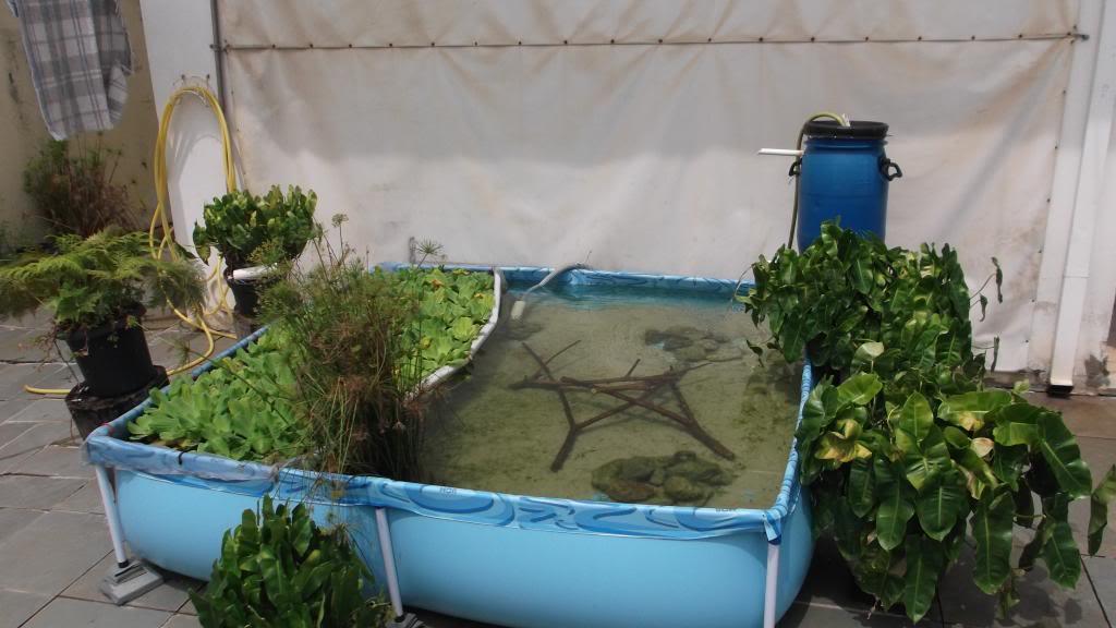 Meu laguinho piscina DSCF0349_zpsbd018cc1