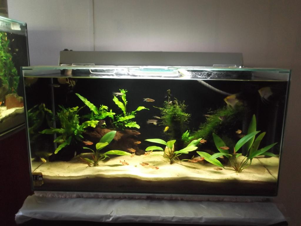 "5° Concurso aquapaisagismo ""VDA"" 2014 (Fotografia, tema Momento Único). DSCF0564_zpsb4ea2157"