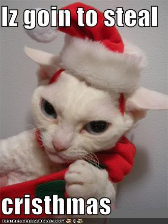 Merry Cat-mas! Funny-pictures-cat-steals-christmas
