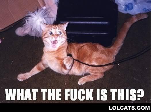 Funny pictures LOLCATZ6