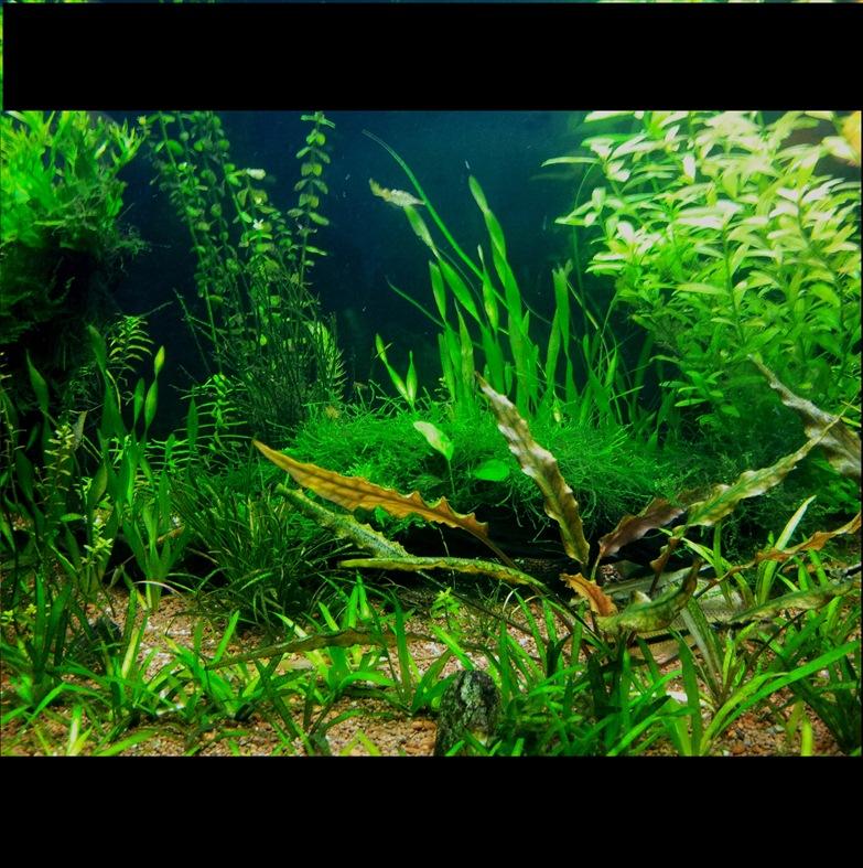 Mon 400L amazonien - Page 2 20120908_210337-2
