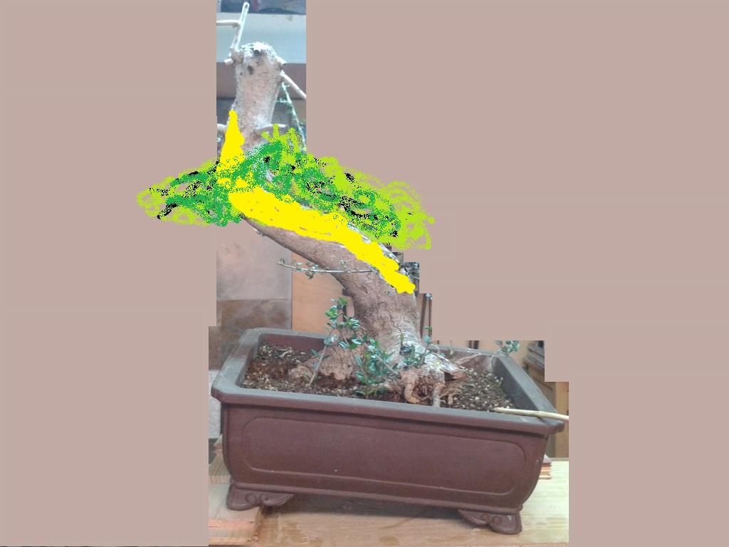 ayuda para diseño de acebuche 2013-01-11122258htynyunr_zpsee55248b