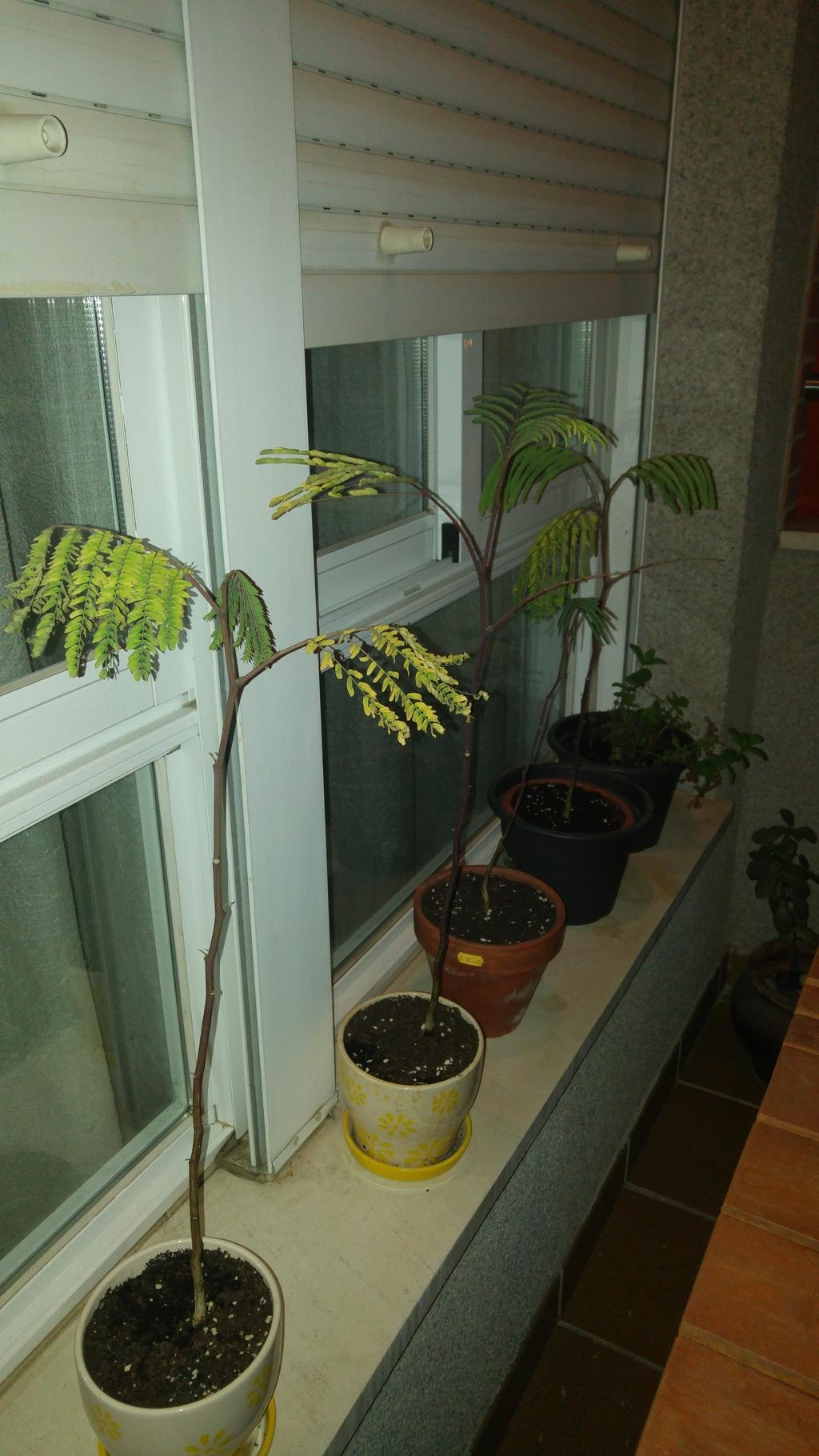 Duda - Cambio de sustrato a plantones recién trasplantados. 20160425_221814_zpsc7qxnr5f