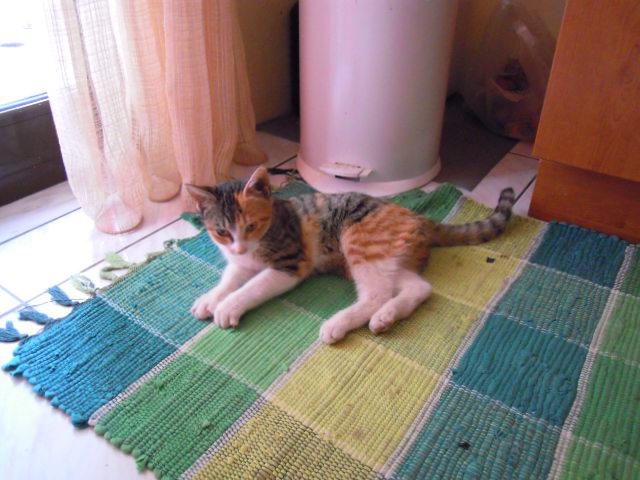 Η γάτα του μπάνιου!  DSCN1064