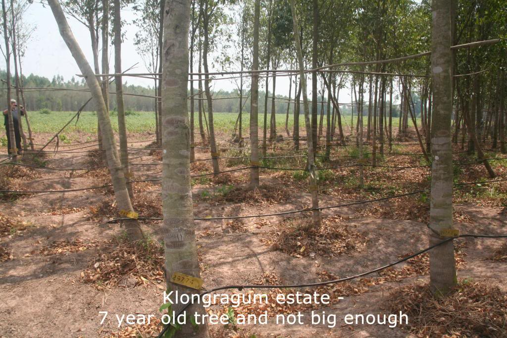 Touchwood - Good share Klongarun-7yearsold_zpsa483d7d7