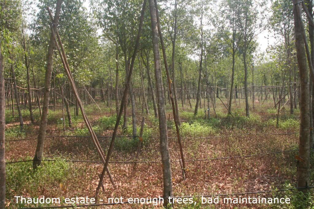 Touchwood - Good share Thaudomestate-notenoughtreesbadmaintainance_zpsf0b855a1