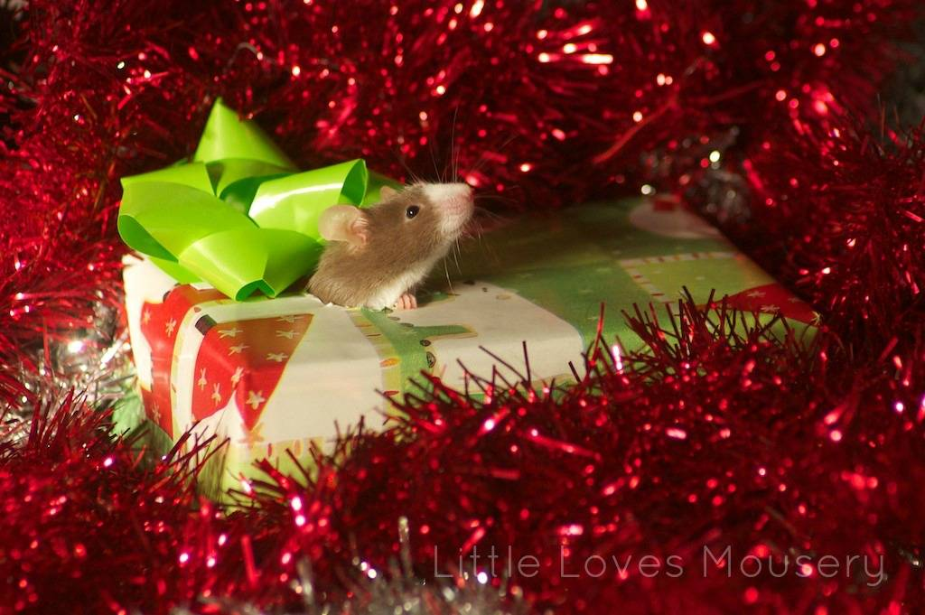 Holiday Photo Contest!! Mouse3_zpsa5eb9a49