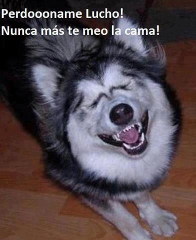 Como te Sientes II Www_atirarlagueva_com_Lo_Mejor_Del_Humor_2_zps838624cc