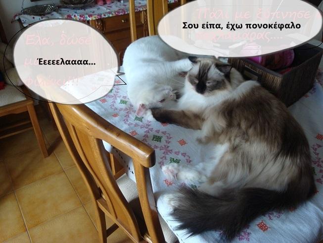 """Οι """"μαύρες"""" σκέψεις μιας γάτας... Μήπως η γάτα έχει κάτι να μας πει; - Σελίδα 18 1DSC09945funny_zpsa22af17b"""