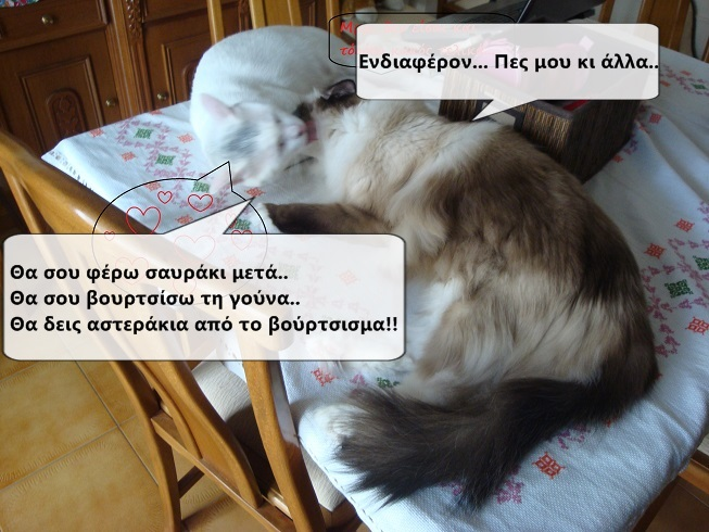"""Οι """"μαύρες"""" σκέψεις μιας γάτας... Μήπως η γάτα έχει κάτι να μας πει; - Σελίδα 18 2DSC09947funny_zps9318acb4"""