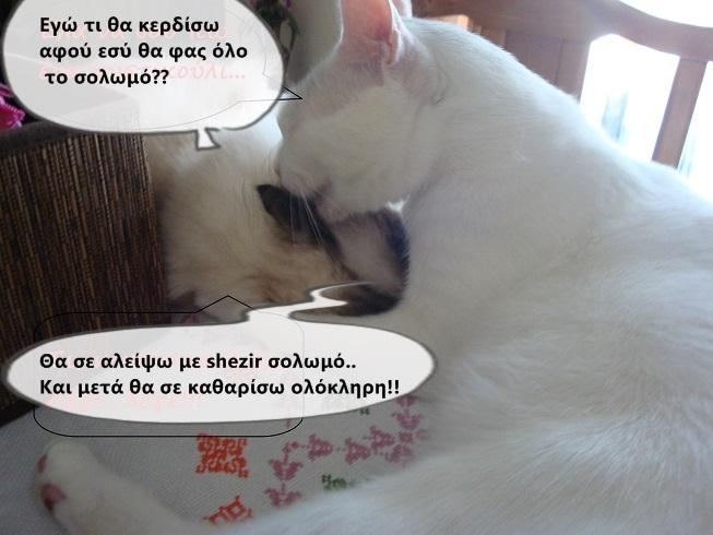 """Οι """"μαύρες"""" σκέψεις μιας γάτας... Μήπως η γάτα έχει κάτι να μας πει; - Σελίδα 18 3DSC09951funny_zpsab8cf13c"""