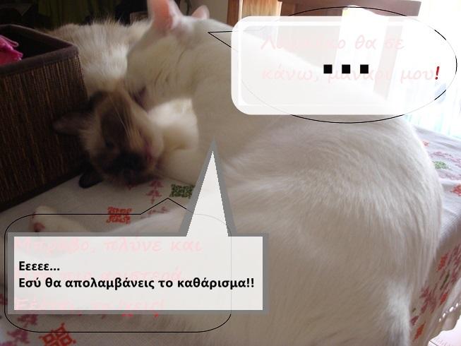 """Οι """"μαύρες"""" σκέψεις μιας γάτας... Μήπως η γάτα έχει κάτι να μας πει; - Σελίδα 18 4DSC09949funny_zps08d8f58e"""