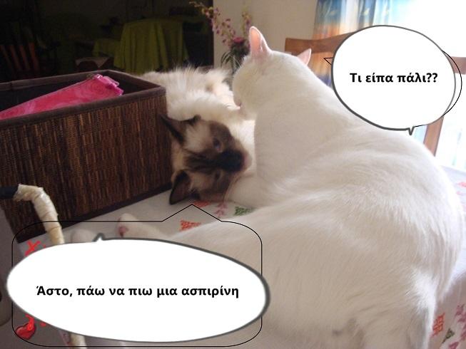 """Οι """"μαύρες"""" σκέψεις μιας γάτας... Μήπως η γάτα έχει κάτι να μας πει; - Σελίδα 18 DSC09948_zps9c171c89"""