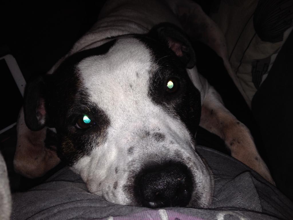 Cuddly selfie snuggle Image_zpsd0280c3f