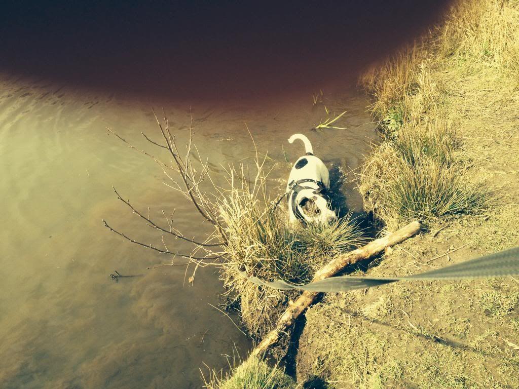 Ozzys log a dog Image_zps5cffb166
