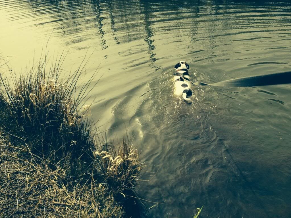 Ozzys log a dog Image_zps5e0dfa30
