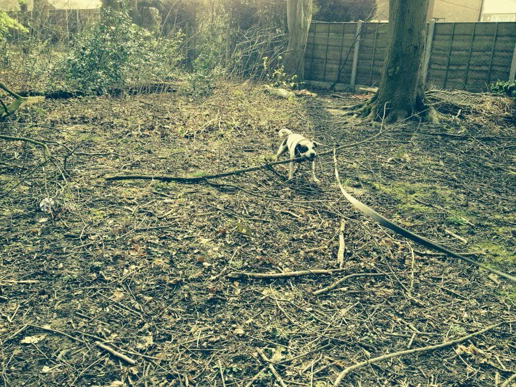 Ozzys log a dog Image_zpsc1b104ea