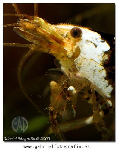 Invertebrados [Atlas] 4470641216_zps21a25abb