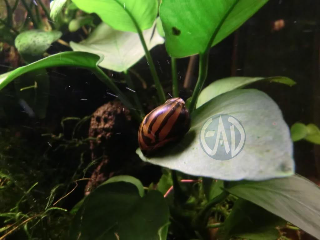 Invertebrados [Atlas] CIMG0020_zps45857b16