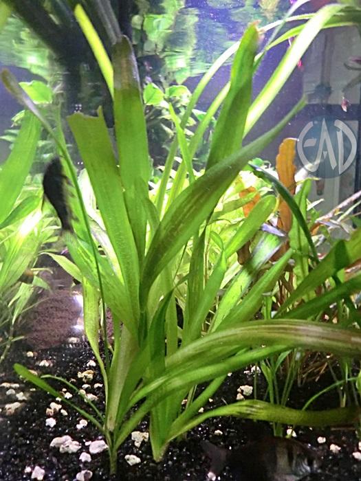 Plantas / Algas [ Atlas ] CIMG4734_zpseb0ec9e5