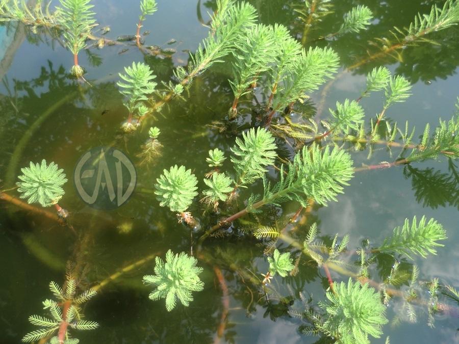Plantas / Algas [ Atlas ] CIMG5390_zps97bd5a30