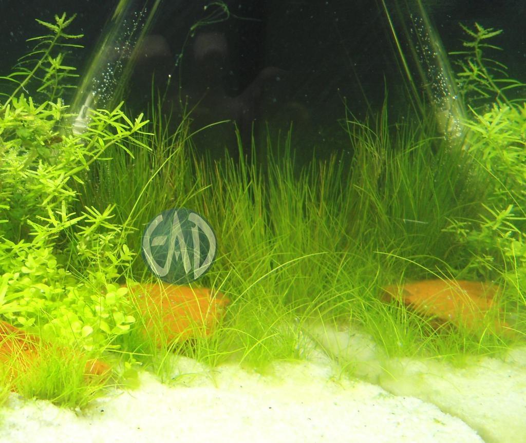 Plantas / Algas [ Atlas ] DSC05245_zpsc9938991