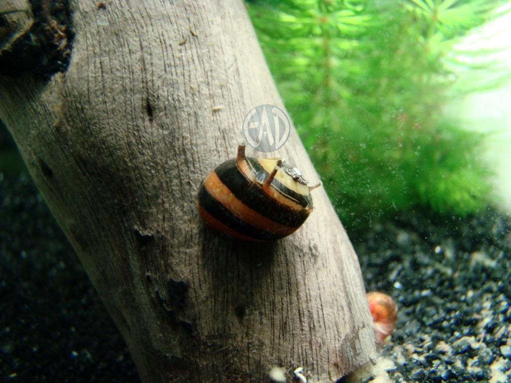 Invertebrados [Atlas] DSC08374_zps2de0a77c