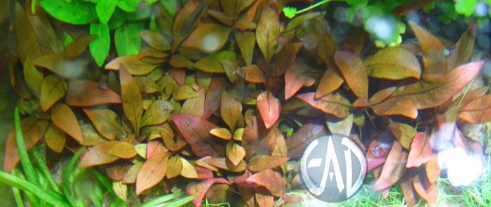 Plantas / Algas [ Atlas ] IMG_6685_zpsa83c1c3b