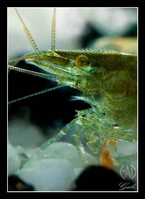 Invertebrados [Atlas] Detallerostrum-1_zpsa1ba1b08
