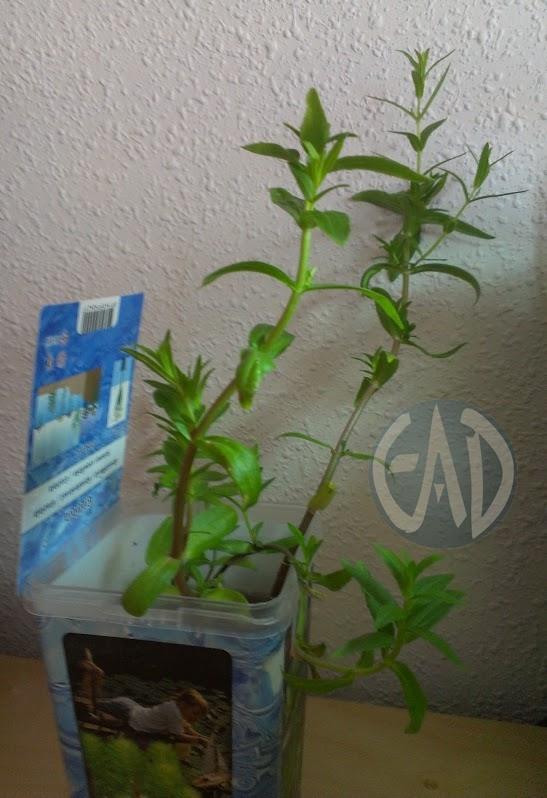 Plantas / Algas [ Atlas ] Gratiolaofficinalis_zps54eb205a