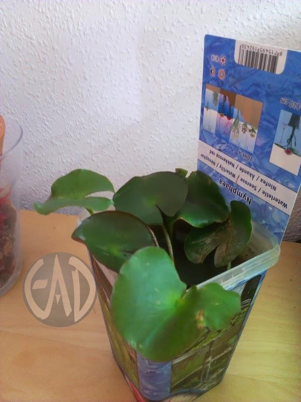Plantas / Algas [ Atlas ] Nenufar_zps1204b3d4