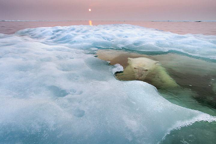 Just...................whatever [4] - Page 3 Polar-Bear-Hudson-Bay-Can-014_zpsdb70890a