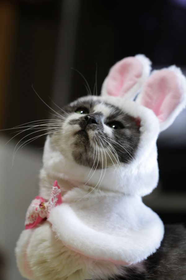 Happy Birthday Figgy Bunnycat_zps60a00608
