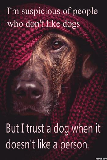 the all Dog thread! [2] - Page 6 Dogsuspicion_zps032983b0