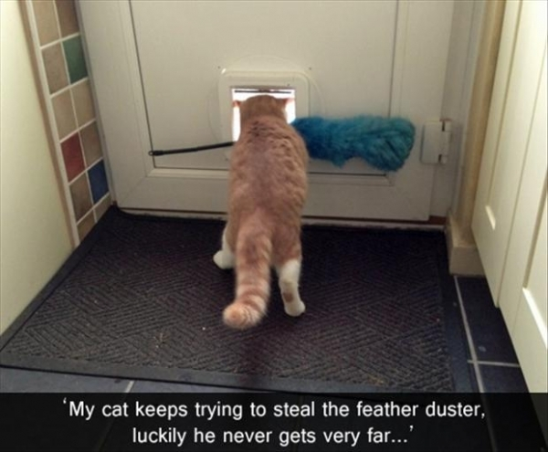 The New Catchat Thread [2] - Page 6 Feather%20cat_zps80a6u128