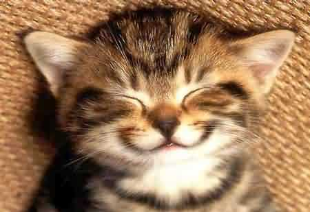 Happy Birthday Figgy Happy-cat_zps13d0ee67