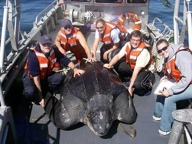 Just...................whatever [6] - Page 2 Pacific%20leatherback%20turtle%20900kg%202000%20pounds_zpsru4lxopd