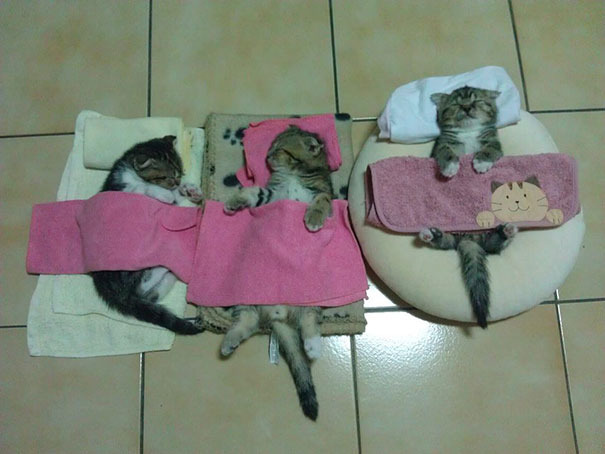 The New Catchat Thread [2] - Page 4 Sleeping-cats-19_zpsmief9nza