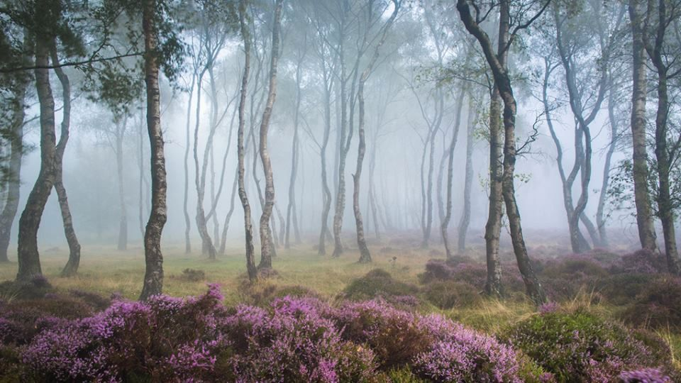 Pics of places that look like places from the films, or are just nice. [2] - Page 38 Stanton%20moor_zpsqrpi2naw
