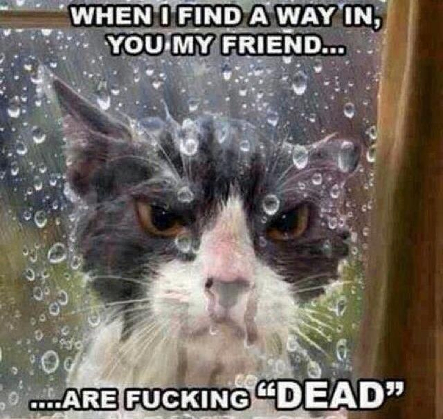 The New Catchat Thread - Page 37 Wetcat_zpsd4544954