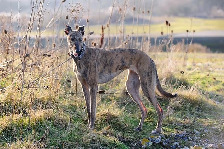 5. Best Sighthound BDNM-40_zps70465b0c