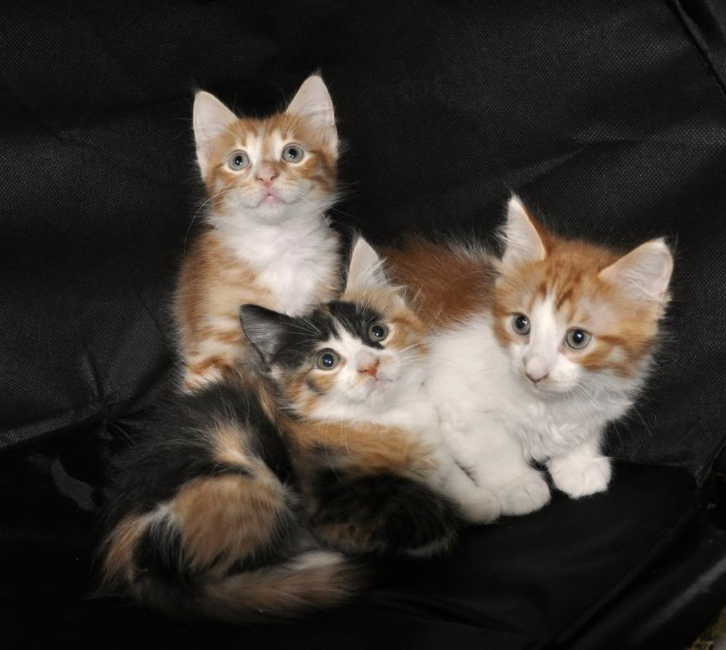 Χαρίζονται μικρά γατάκια 5378224e-5a74-4c53-a5a5-8bc57985c8dc_zps37666bc3