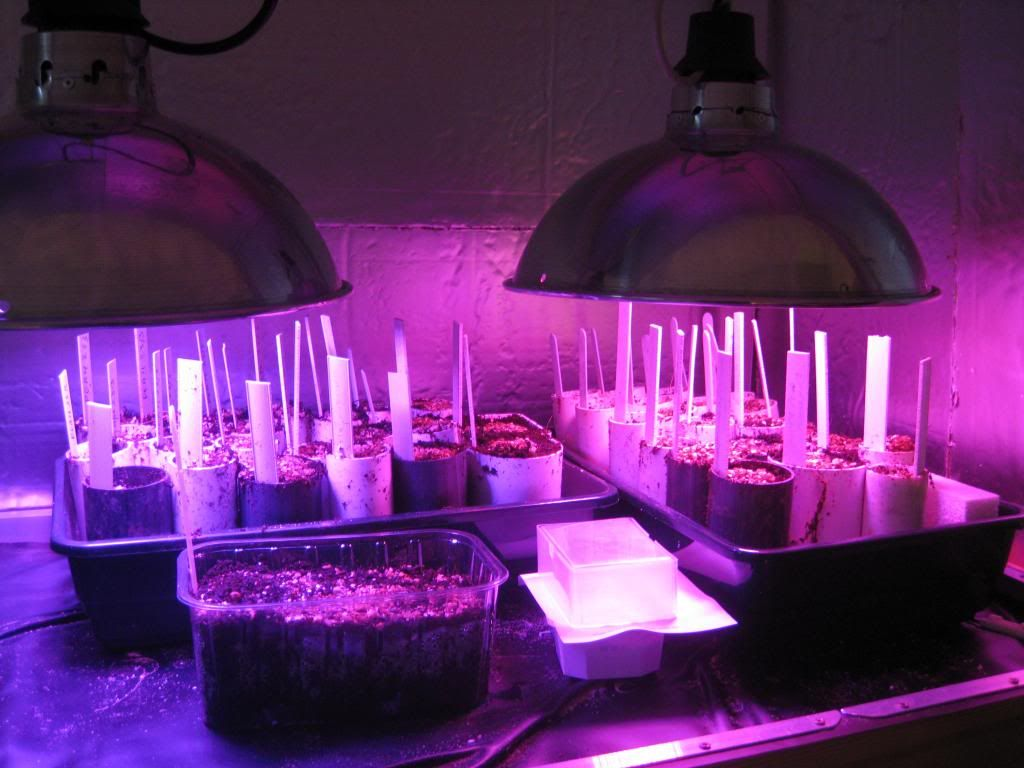 Planting in Tubes Glasshouseampgarden012_zps138f8279