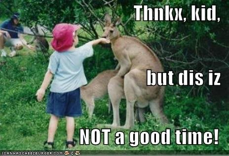kangaroo photo kangaroofood.jpg
