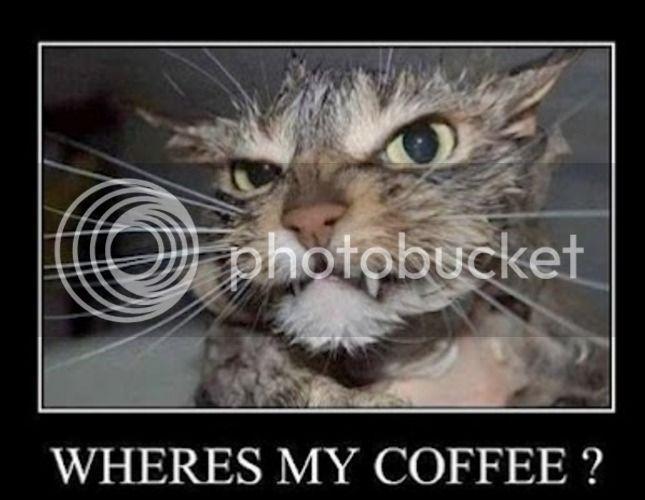 photo funnycoffeecat_zps16837d14.jpg
