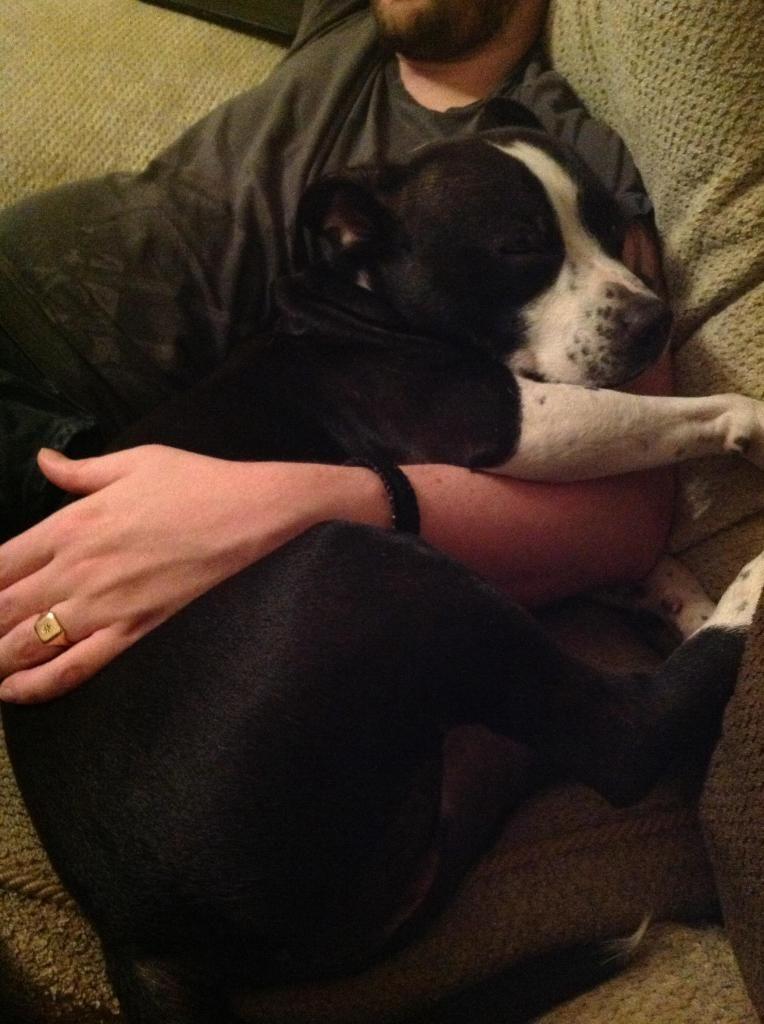 Nico,practicing sleeping and cuddling!  Imagejpg1_zps07e22e15