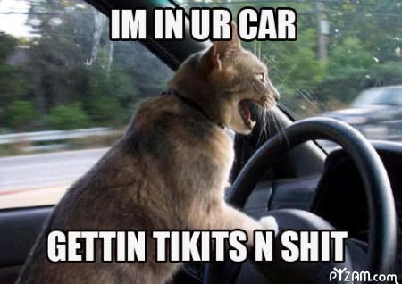 Pictures that make you laugh thread - Page 2 ImInYourCarKitty