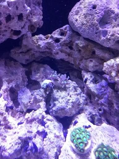 Hammer coral a la venta 20120307_202156