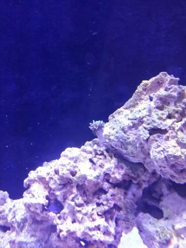 Hammer coral a la venta 20120307_202229