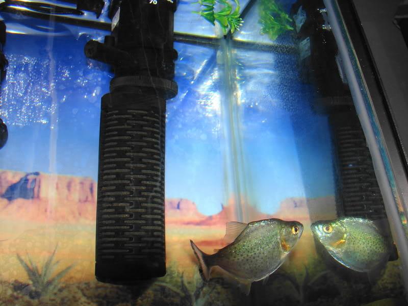 Couple shots of my fish. DSC02622